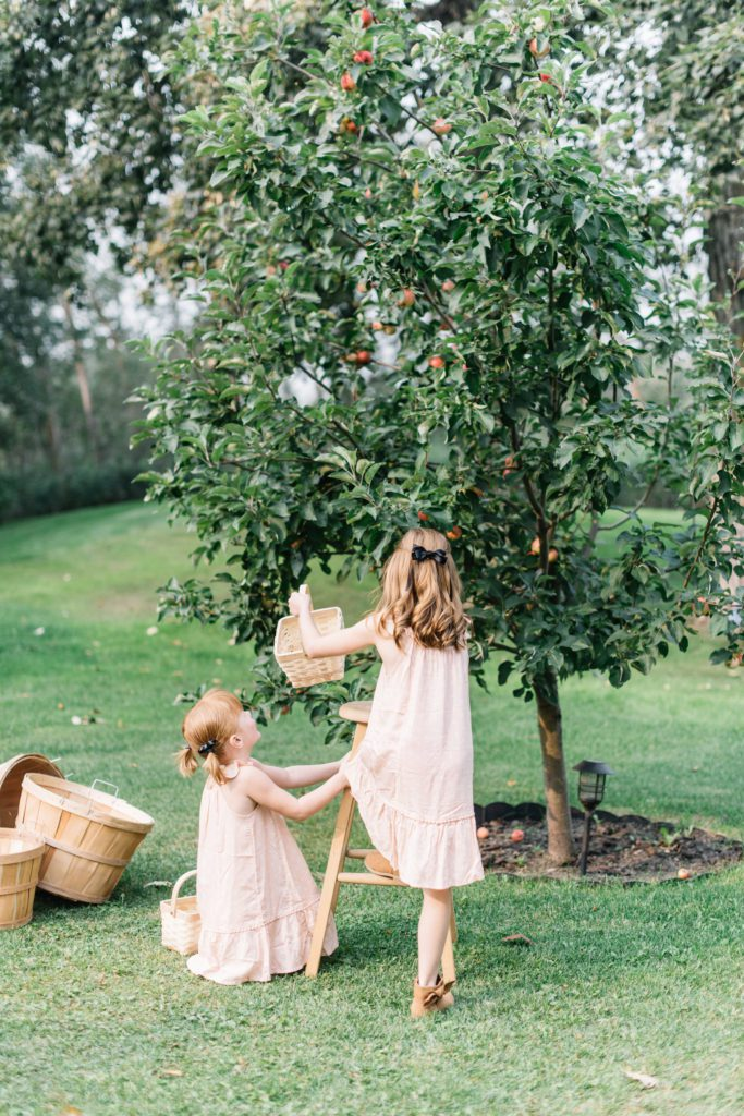 Fresh picked apples are delicious and make pretty fall home decor