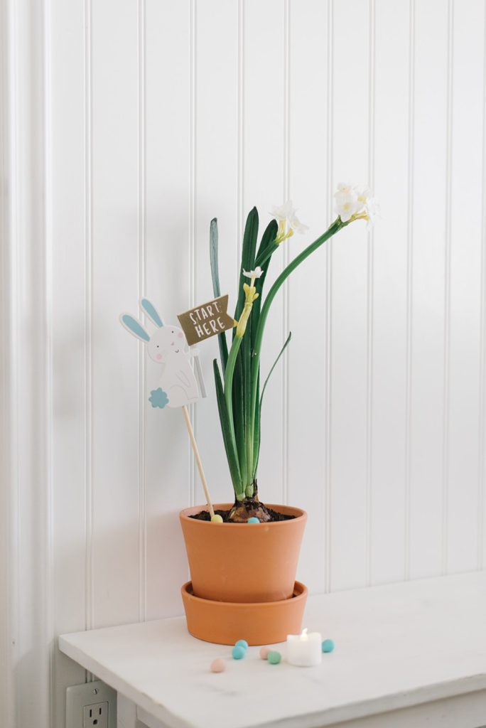 potted paperwhites with Easter egg hunt sign and mini eggs. Easter and Spring Decor