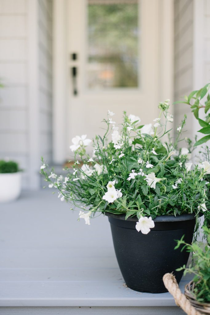 White flowers in black pot on front porch