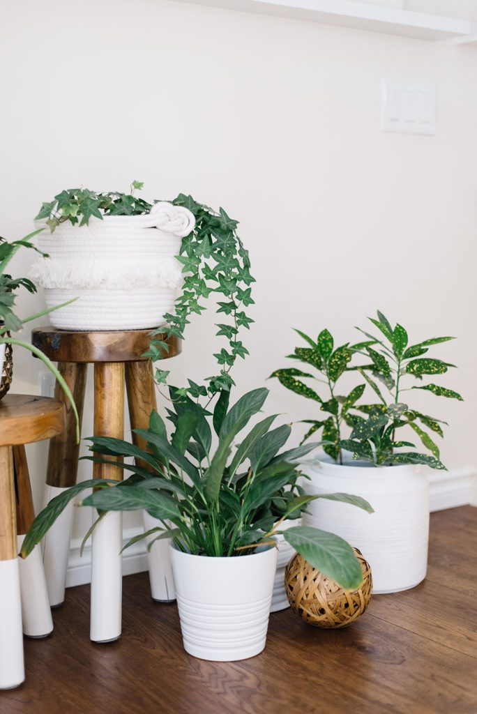 Houseplants make excellent Spring decor!