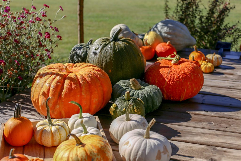 Fresh picked pumpkins sitting on a deck