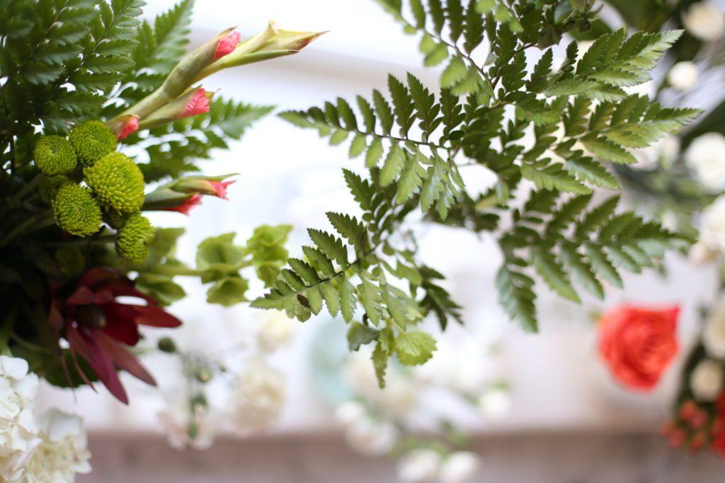 Plant Greens