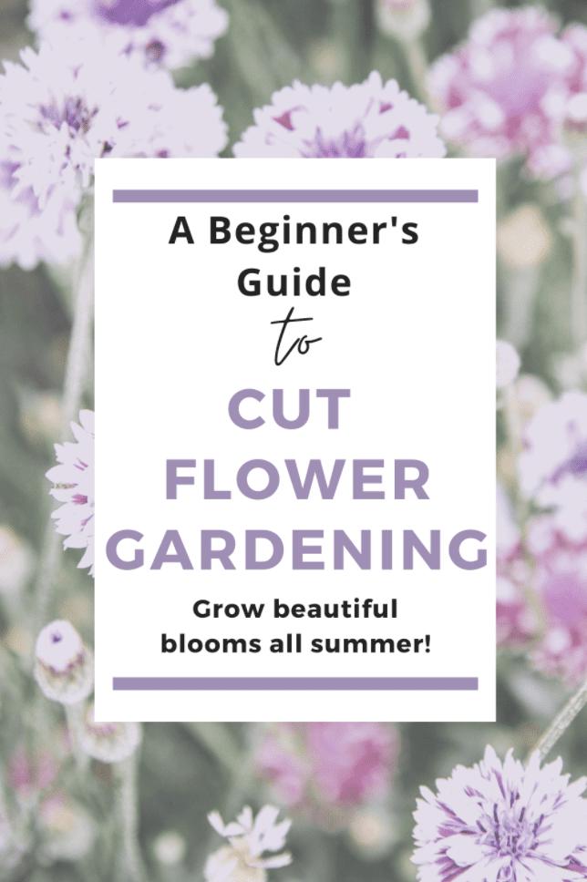 How to start a cut flower garden