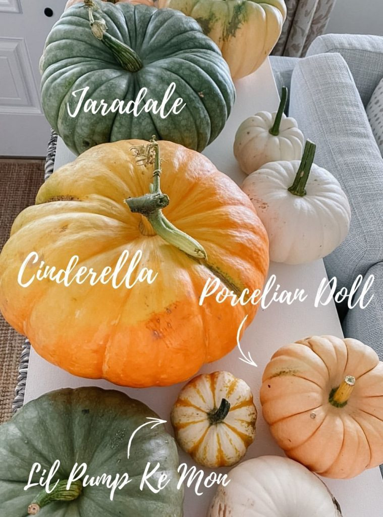Pumpkins and their variety names