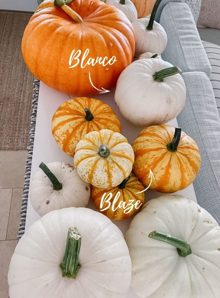 Pumpkins and labelled varieties