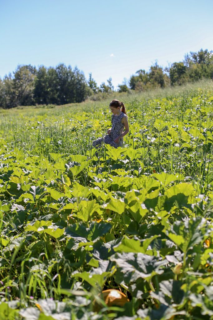 girl walks through field looking for pumpkins