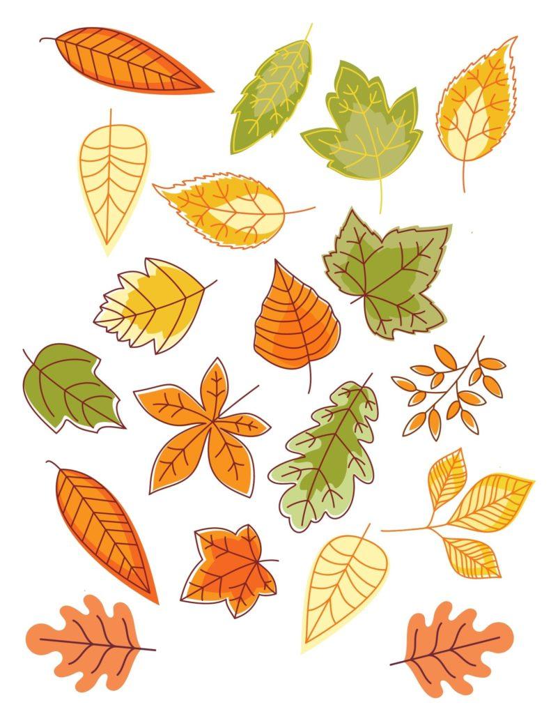 Fall leaf graphics