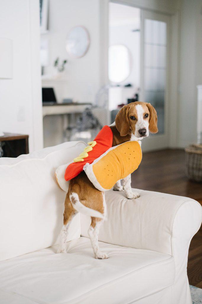 hot diggity dog beagle pouch