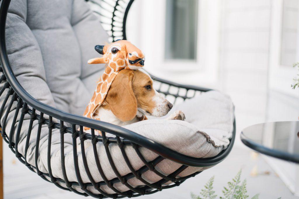 Puppy in Halloween costume sitting in swing