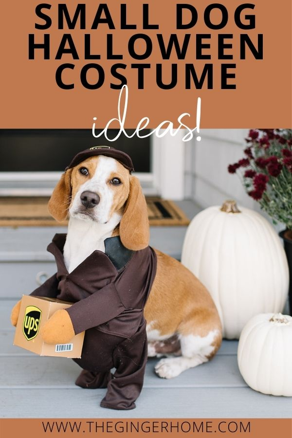 Small Dog Halloween Costumes!