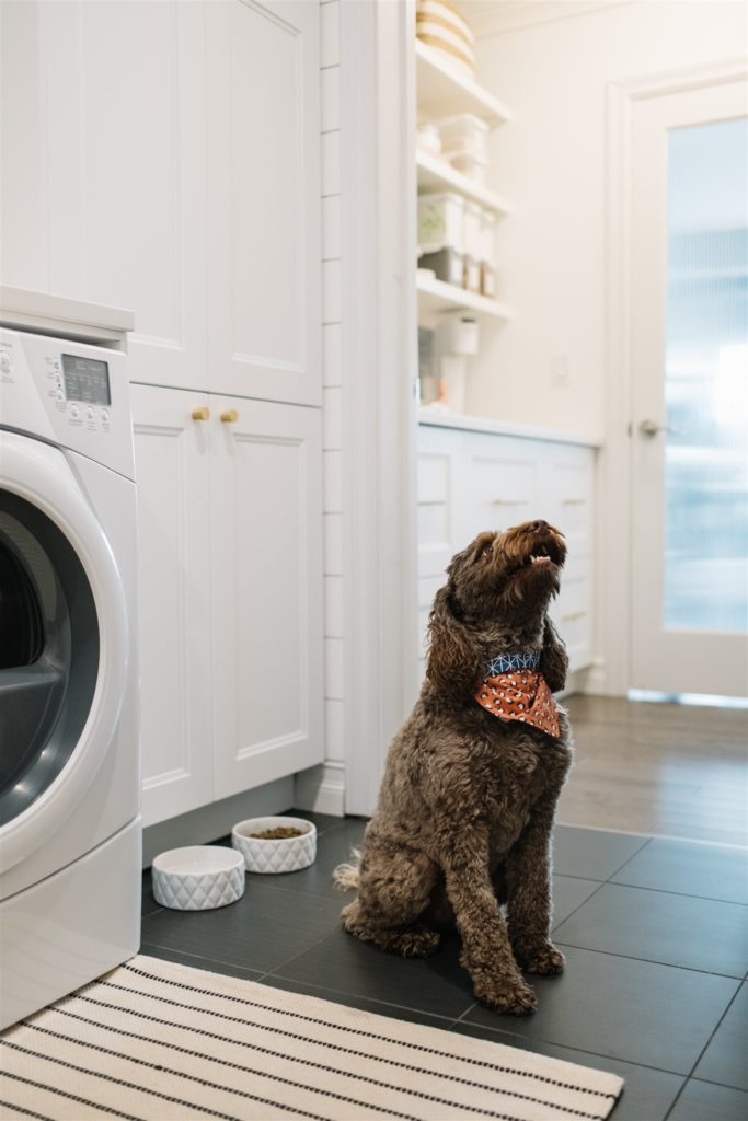 A dog sits by it's food bowls in a mudroom and laundry room entryway.
