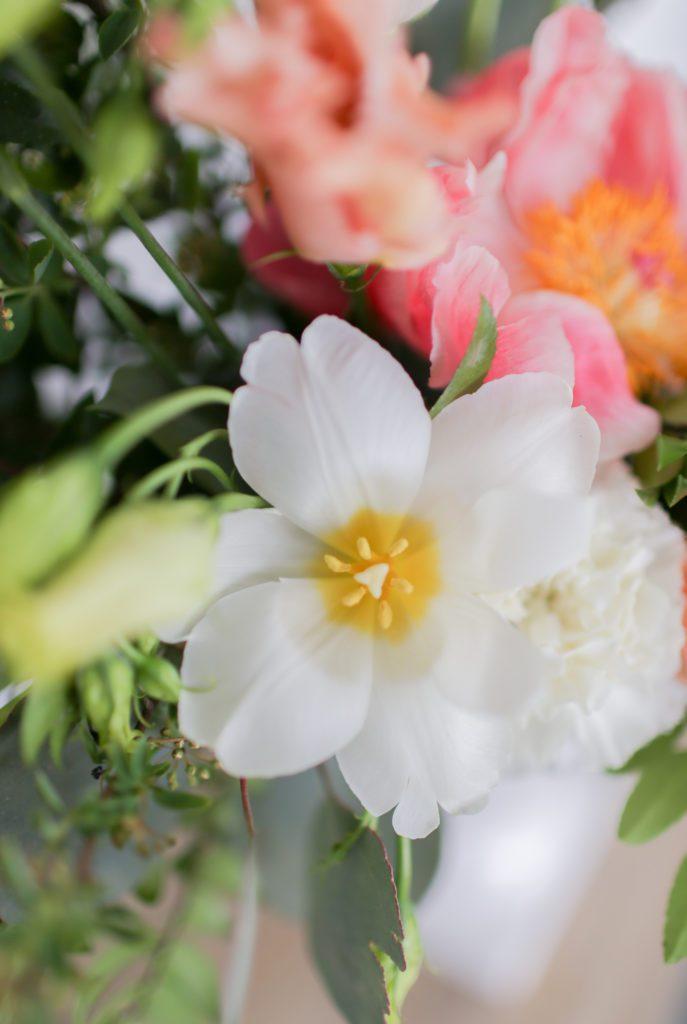 A reflexed white tulip